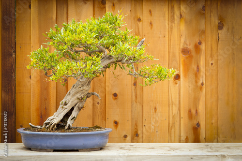 Aluminium Bonsai Pomegranate Bonsai Tree Against Wood Fence