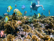 Man snorkeling underwater on a shallow coral reef with tropical fish front of him, Caribbean sea - 41220983