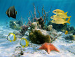 Fishes and sea star