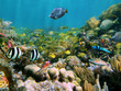 Marine life in a coral reef