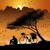 Vélo au pied de l'arbre