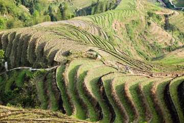 terraced fields scenery
