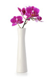Pink Orchid flower in white vase