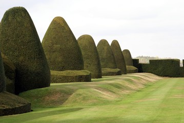 topiary and hedge. shape