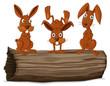 Rabbit series