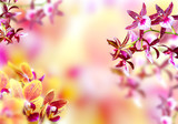 Fototapety Blooming background