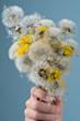 Pusteblumen: Eine Handvoll Wünsche