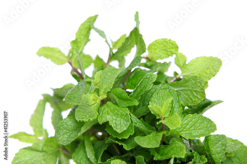 Lemon balm on bright background.