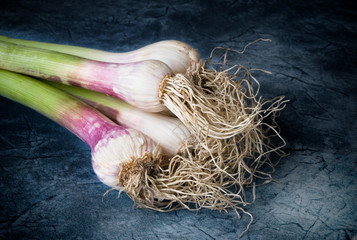 Aglio - Allium Sativum