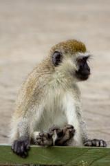 The Monkey