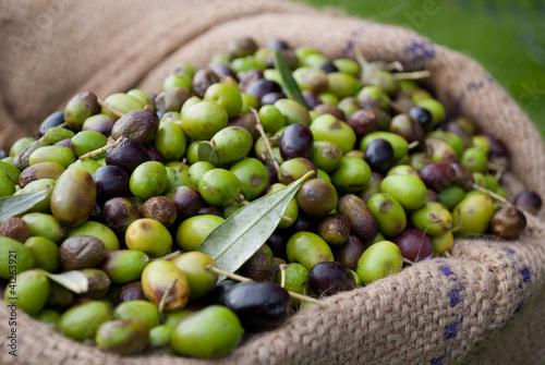 olive italiane