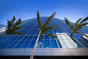 Palm trees and high rises reflect of of glass building