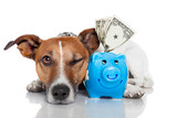 Fototapety dog with piggy bank