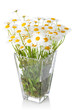Beautiful marguerite flowers in vase