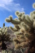 Prickly Cactus in Arizona Desert