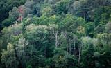 Fototapeta drzewo - las - Las