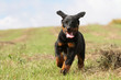 dog running with ears in the wind - allure rigolote