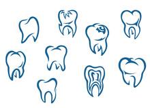 Zęby człowieka ustaw