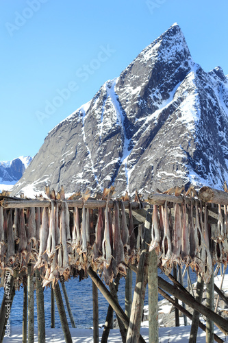 Hamnøy's mounts and stockfish