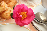 Camellia With Food