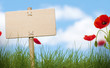 blank wooden sign, grass and poppies