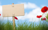 Fototapety blank wooden sign, grass and poppies