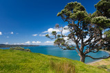 Coastal Farmland Landscape with Pohutukawa Tree