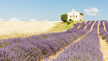 chapel with lavender and grain fields,Valensole,Provence