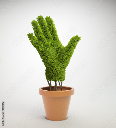plant shaped like a human hand growing out of a pot