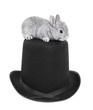 Gray rabbit bunny baby on top hat isolated