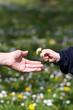 Blumenngeschenk