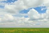 White Clouds over a Meadow - 41283722