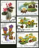 Aquatic plant, postage stamp poster
