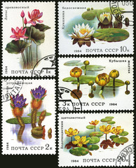 Aquatic plant, postage stamp