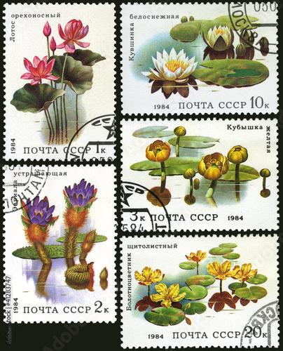 Aquatic plant, postage stamp
