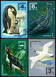 Antarctic Fauna, postage stamp of the USSR poster