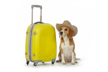 chien beagle avec valise et chapeau cow-boy