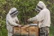 apiculteurs