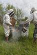apiculteurs au travail