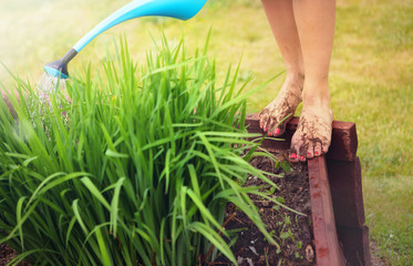 Gardening concept. Muddy feet with red nails.