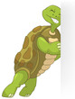 Funny Turtle. Pushing.