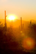 sunset in Saguaro National Park, Arizona, USA