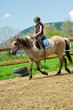 Horse riding - lovely girl is riding a horse
