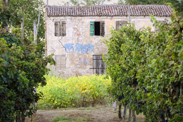 Rural ruin in a vineyard