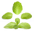 Collection of fresh mint isolated on a white background