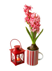 Hyacinths and flashlight on a white background