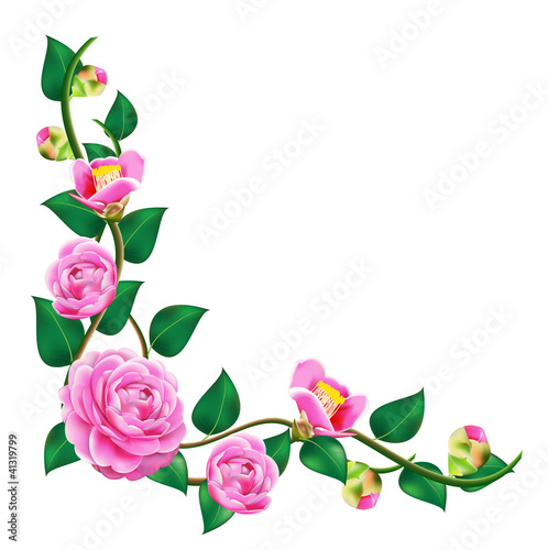 Vine beautiful camellia vector