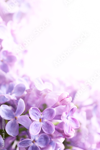 Foto Spatwand Lilac Art Spring lilac abstract background