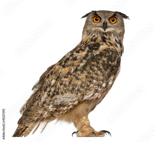Portrait of Eurasian Eagle-Owl, Bubo bubo