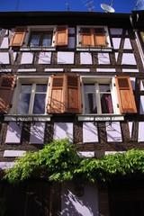 fenêtres et glycine